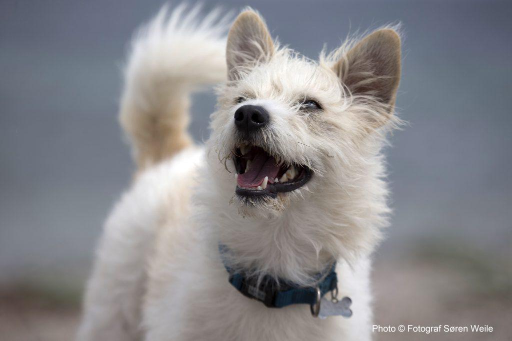 Klik på nedenstående link og se mere fra Hundetraffet